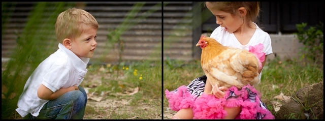 Chickens with Bada Bing Photography